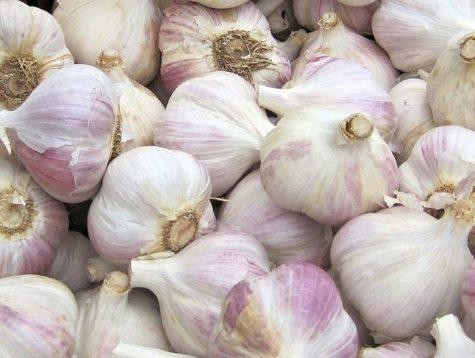 garlic 788830_1280