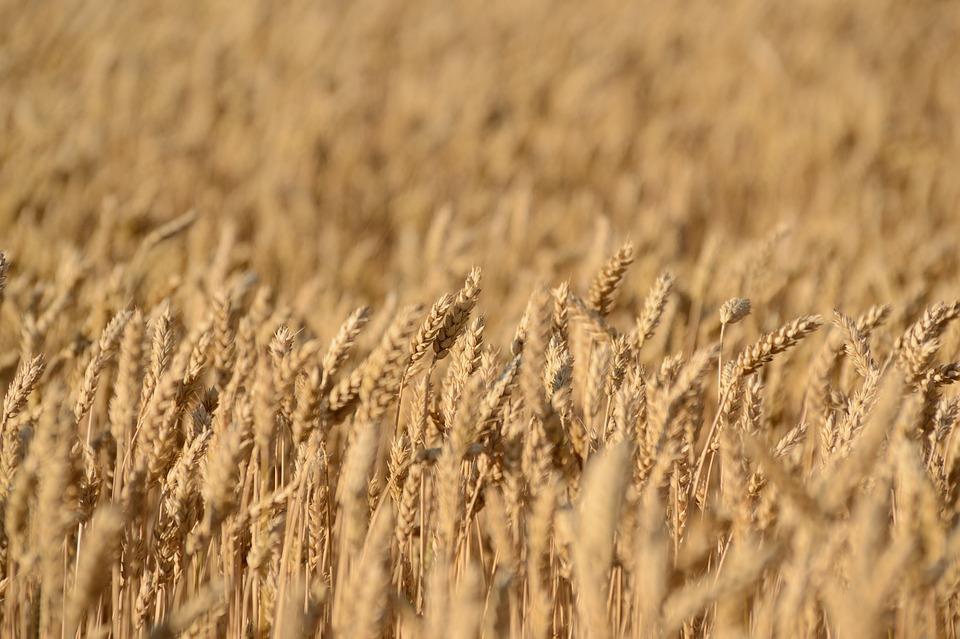 crops 1768222_960_720